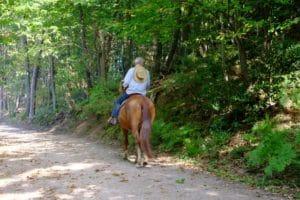 Mängel am Pferd