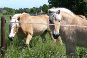Behandlungsfehler beim Pferd